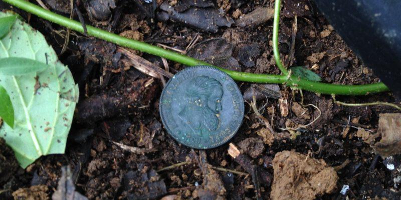moeda capa
